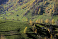 Piatra craiului mountains aerial view of trees and green fields on mountainside romania Stock Photography