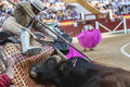 Picador bullfighter lancer whose job it is to weaken bull s nec jaen spain october neck muscles in the bullring for jaen spain Royalty Free Stock Photo