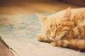 Piccola kitten sleeping on bed rossa Immagini Stock Libere da Diritti