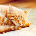Piccola kitten sleeping on bed rossa Fotografia Stock Libera da Diritti