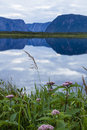 Pick flowers blue cliffs the of western brook pond and dusk clouds reflected in a pond in gros morne national park in newfoundland Royalty Free Stock Photo