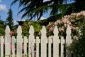 Picket fence and azalea Stock Image