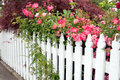 Picket fence with roses white pink rose bushes Stock Photos