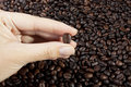 Picking coffee bean Stock Photos