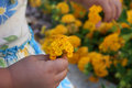 Picking Flowers Royalty Free Stock Images