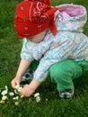 Picking flowers Stock Photos