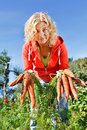 Picking organic carrots Stock Photos