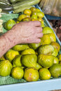 Picking up fresh organic figs person delicious bright green on a beautiful sunny market selective focus high resolution photo Royalty Free Stock Photography