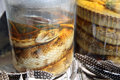 Pickled snakes in namibia africa Royalty Free Stock Image