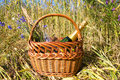 Picnic basket in cornfield in summer time Stock Photography