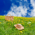 Picnic basket dandelion meadow Stock Photos