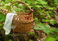 Picnic basket in forest selective focus Royalty Free Stock Photography