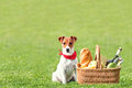 Picnic basket green lawn Stock Photography