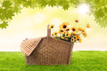 Picnic basket and wildflowers filled with yellow Stock Photos
