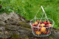Picnic with mixed berries and fruits summer apricots peaches strawberry sweet cherry on mossy tree in forest Royalty Free Stock Image