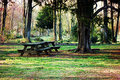 Picnic table in forrest setting a deep forest on sunny day Royalty Free Stock Images