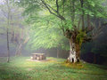 Picnic table in mysterious forest with fog Royalty Free Stock Photography