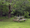 Picnic table wooden on the grass in a park Royalty Free Stock Images