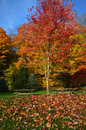 Picnic Tables, Fall Colors Royalty Free Stock Photo