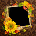 Picture on autumn background Royalty Free Stock Image