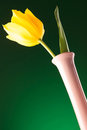 Picture from bellow of a fresh yellow tulip Royalty Free Stock Photo