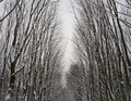 Picture of frozen trees Royalty Free Stock Photo