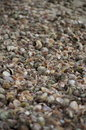 Picture full of sea shells close up down the cape cod beach sand all in all kinds colors Royalty Free Stock Photography