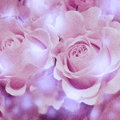 Picture of roses