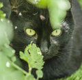 The garden - a cute cat in the sunshine. Royalty Free Stock Photo
