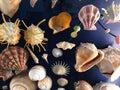 Top view of seashells Royalty Free Stock Photo