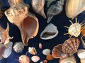 Top view of seashells in a dark background Royalty Free Stock Photo