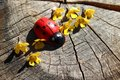 Ladybird and flowers on a tree trunk Royalty Free Stock Photo