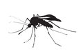 Picture of silhouette of a mosquito