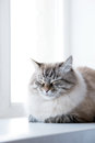Picture of sleeping kitten on window Royalty Free Stock Photo