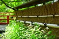 Japanese garden`s bamboo fence in spring, Kyoto Japan. Royalty Free Stock Photo