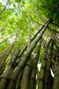 Picture of tropical bamboo forest high Stock Images