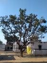 Breadth-taking tree