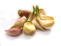 Pictures of dried garlics germinated for experiments and assignments Royalty Free Stock Photo