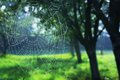 Pictures of spider webs in the spring, during the morning, green blue color, silence and peace Royalty Free Stock Photo