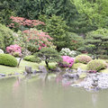 Picturesque japanese garden beautiful flowers and plants in seattle in spring time Royalty Free Stock Photos