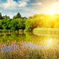 A picturesque lake overgrown with reeds. In the blue sky a brigh Royalty Free Stock Photo
