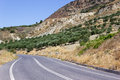 Picturesque road between olive trees on greek island crete Stock Photography