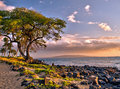 Picturesque tree by the ocean in the glow of the afternoon sunset Royalty Free Stock Photo