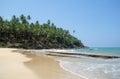 Picturesque tropical beach sri lanka Royalty Free Stock Image