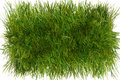 Piece of grass Royalty Free Stock Photo