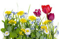 A piece of an ideal spring meadow Royalty Free Stock Photos