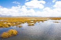 A piece of marsh near tibet in sichuan province china its name is flowery lake Stock Images