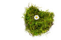 Piece of turf and moss in heart shape with a daisy isolated on w Royalty Free Stock Photo