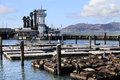 This is PIER 39 and the sea lions Stock Image