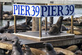 Pier 39 Seals Royalty Free Stock Photography